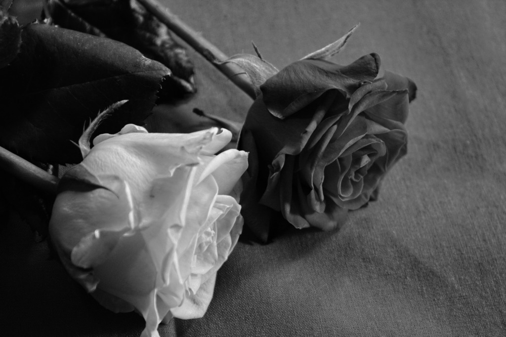 rose_black_white_love